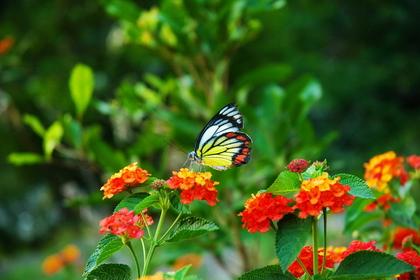 清境農場蝴蝶園區