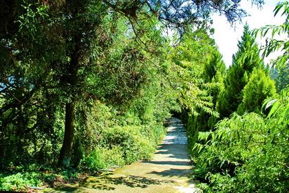 清境柳杉步道