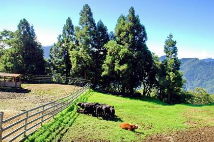 清境農場畜牧中心