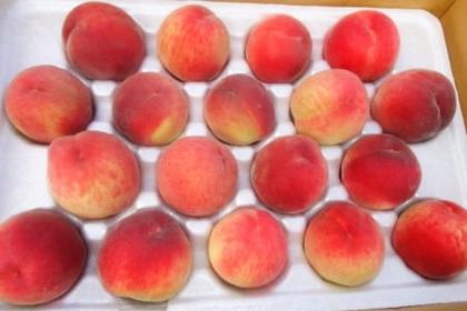 清境以馬內利~水蜜桃成熟時