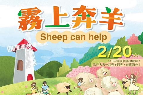 2021清境農場霧上奔羊
