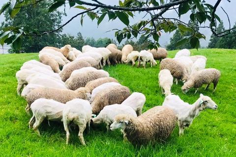 因應新冠疫情,清境農場暫停營業